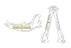 Mandibular Fractures | ACVS